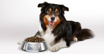 Comment adapter l'alimentation de mon chien selon les saisons ?