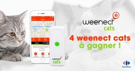 Concours Weenect Cats : avez-vous gagné l'un des 4 colliers GPS mis en jeu ?