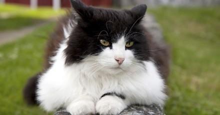 Retrouvé à plus de 850 km de chez lui, un chat regagne sa maison en covoiturage !