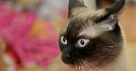 Chat perdu depuis 4 ans : un coup de fil la met dans tous ses états !