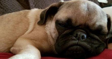 Il trouve son chien enfermé dans une cage dans le salon : la caméra révèle une vérité inimaginable