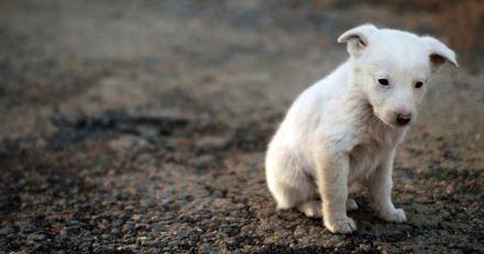 Bientôt une loi pour réduire les abandons d'animaux de compagnie ? C'est le projet que va déposer un député