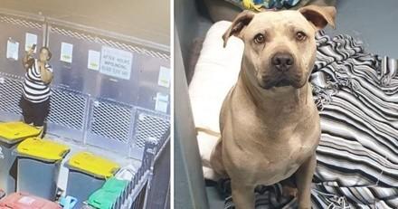 Elle abandonne son chien devant un refuge et sort son téléphone : ce qu'elle fait est révoltant