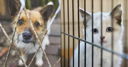 Enquête Wamiz exclusive : Pourquoi les gens abandonnent-ils leurs animaux ? (Infographie)
