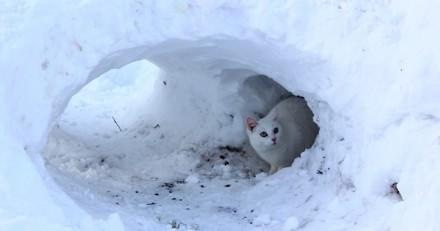 Comment construire un abri pour les chats errants ?
