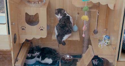 Ce Pékinois crée un abri à reconnaissance faciale pour les chats ! (vidéo)