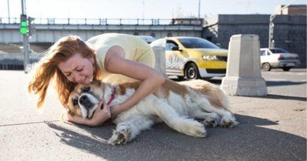 Ce site vous prévient si un chien meurt dans un film pour que vous puissiez vous y préparer