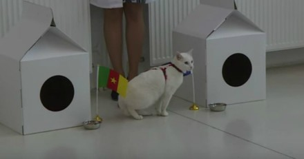 Achille, le chat qui peut prédire les résultats au foot