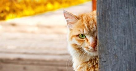 Des chats espions greffés de micros et d'une antenne : le projet délirant de la CIA