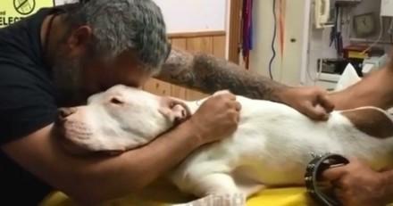 Vidéo infiniment triste : Il dit adieu à son Pitbull pour toujours