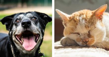 Adopte ton vieux : voilà pourquoi adopter un chat ou un chien âgé est une bonne idée