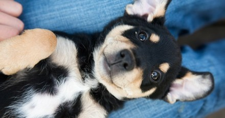 Où et comment bien acheter ou adopter son chien ?