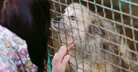 Près de 1000 animaux adoptés ce week-end à la SPA !