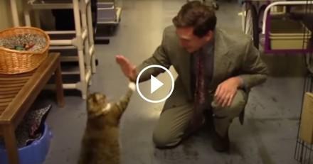 Vous ne devinerez jamais ce qu'a fait ce refuge pour promouvoir l'adoption de ses animaux ! (Vidéo du jour)