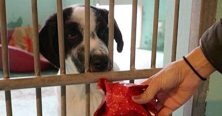 Wamiz offre un Noël aux chiens abandonnés, découvrez la magie de leur réaction ! (Vidéo)