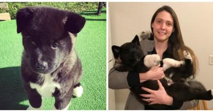 Ils adoptent un chien, mais n'avaient pas du tout imaginé qu'il deviendrait aussi grand !