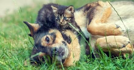 Alerte canicule : veillez à bien protéger vos animaux de la chaleur !