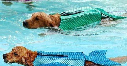 Ces gilets de sauvetage sirène sur Amazon transformeront votre chien en un nageur fabuleux