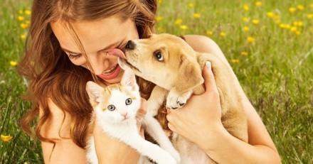 Allergie aux chats et chiens : quelles solutions ?