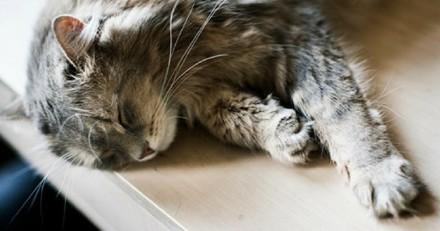 7 réflexes pour prévenir les allergies lorsqu'on adopte un chat