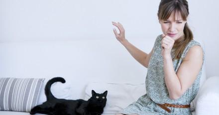 4 astuces à appliquer dans votre maison avant de recevoir des personnes allergiques aux chats