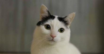 Abandonné, ce chat malade de 5 ans attend une famille pour lui rendre le sourire