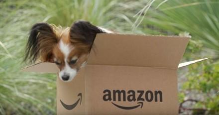 500 chiens travaillent tous les jours au siège d'Amazon !
