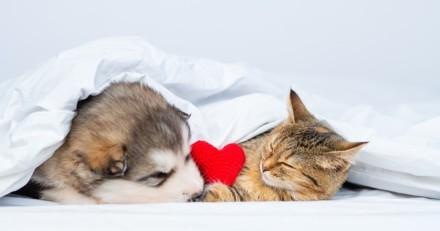Saint-Valentin 2021 : VOS plus belles photos d'amour avec vos animaux !