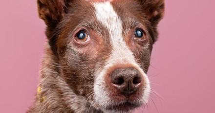 Cette chienne se laissait mourir dans son refuge après 4 abandons, les réseaux sociaux l'ont sauvée