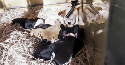 Les parlementaires tombent d'accord sur le projet de loi sur la maltraitance animale : « une magnifique victoire pour les animaux »
