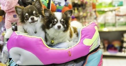 Pour ou contre ? San Francisco interdit la vente de chiens et chats en animalerie