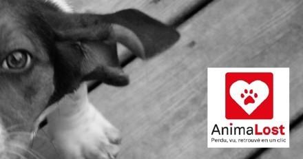 Votre animal de compagnie s'est perdu ? Retrouvez-le en un clic grâce à AnimaLost !