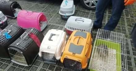 30 animaux maltraités dans une maison : les sauveteurs sont révoltés en découvrant la scène d'horreur