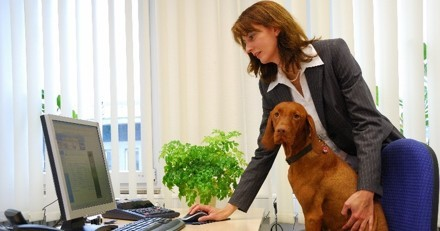 Emmener son chien ou son chat au bureau : possible ou pas ?
