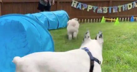 La fête d'anniversaire de ce chien est certainement meilleure que celle de votre enfant !