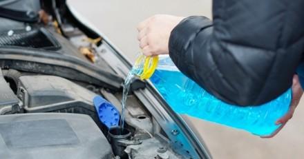 Poison : attention, l'antigel des voitures est toxique pour les chiens et chats !