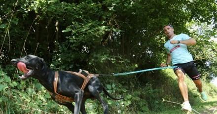 Sport avec son chien : une reprise saine et progressive grâce aux conseils d'Antony Le Moigne