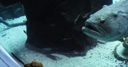 L'aquarium ferme à cause du coronavirus : des petits invités sont autorisés et font fondre le monde entier