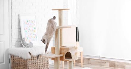 Il s'approche de l'arbre à chat et pousse un hurlement strident en voyant ce qu'il y a dedans !