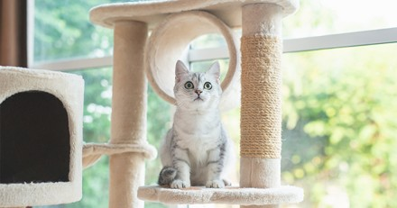 Arbres à chat : 3 promotions à saisir !