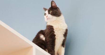 Aristide : un hôtel 100% pensé pour le bonheur des chats (Vidéo)