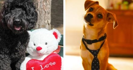 Le poste de « Responsable du bonheur » de cette entreprise est occupé par… deux chiens !