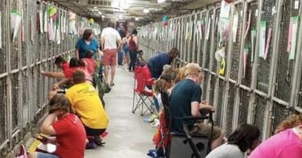 Plus de 100 bénévoles sont allés rassurer des chiens de refuge terrifiés par les feux d'artifice