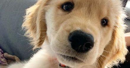 En plein confinement, ce petit garçon a envoyé la plus adorable des lettres à un propriétaire de chien de sa rue
