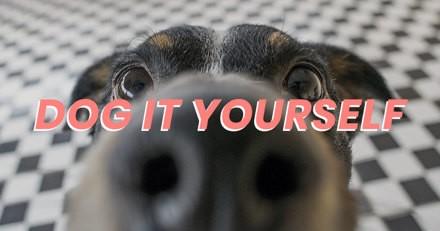 Dog it Yourself : 30 astuces hyper simples pour occuper votre chien pendant le confinement (Recettes, tricks & DIY)