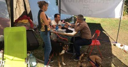 L'association Milit'Activ'974 fait une grève de la faim pour lutter contre l'errance animale à la Réunion
