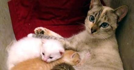 En visite chez ses voisins, il regarde dans le panier du chat et reste totalement abasourdi !