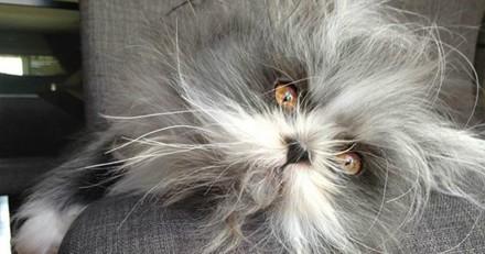 Voilà Atchoum, le chat qui ressemble à un loup-garou ! (Photos)