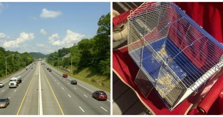Elle s'approche d'une cage abandonnée sur l'autoroute et est scandalisée par ce qu'elle voit