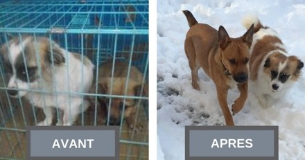 Elle pensait adopter une chienne, mais le destin en a décidément autrement !
